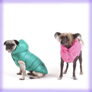 Outfit: La collezione di I Love My Dogs la trovi da Mon Petit Boutique